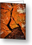 Outdoor Canopy Greeting Cards - Reaching Out Greeting Card by Darren Fisher