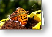 Colorful Photography Greeting Cards - Ready for Lift Off Greeting Card by Karen M Scovill
