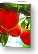 Peaches Greeting Cards - Ready to Pick Greeting Card by Gwyn Newcombe
