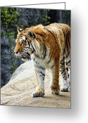 Paws Digital Art Greeting Cards - Ready to pounce Greeting Card by Gordon Dean II