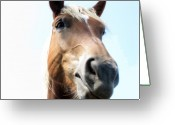 Horse Greeting Cards - Really Greeting Card by Amanda Barcon