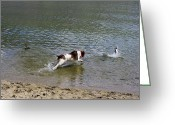 Dog Photographs Greeting Cards - Really enjoying my day at the lake Greeting Card by John  Greaves