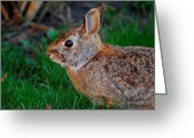 Nikon D200 Greeting Cards - Rebbit Greeting Card by Dragan Kudjerski