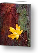 Maple Greeting Cards - Reclamation Greeting Card by Mike  Dawson