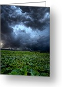 Rain Storms Greeting Cards - Reclusive Greeting Card by Phil Koch