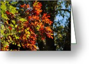Red Leaves Greeting Cards - Red and Green Autumn Leaves I Greeting Card by Jai Johnson