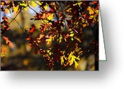 Red Leaves Greeting Cards - Red and Green Autumn Leaves II Greeting Card by Jai Johnson