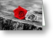 Red Roses Greeting Cards - Red and White Greeting Card by Emily Stauring