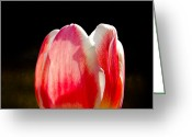 Spring Florals Greeting Cards - Red and White Greeting Card by Michel Soucy