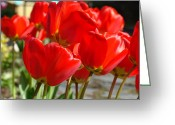 Seasons Framed Prints Prints Greeting Cards - Red Art Spring Tulip Flowers Floral Greeting Card by Baslee Troutman Photography Art Prints
