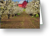 Blossoms Greeting Cards - Red Barn Avenue Greeting Card by Mike  Dawson