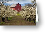 Blossom Photo Greeting Cards - Red Barn Spring Greeting Card by Mike  Dawson