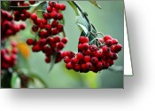 Bruster Greeting Cards - Red Berries Greeting Card by Clayton Bruster