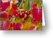 Leaves Photographs Greeting Cards - Red Berries Fall Colors Greeting Card by James Steele