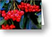 Lyle  Huisken Greeting Cards - Red Berries Greeting Card by Lyle  Huisken