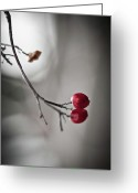 Monochrome Greeting Cards - Red Berries Greeting Card by Mandy Tabatt