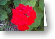 Phuong Tu Greeting Cards - Red Bloom Greeting Card by Phuong Tu