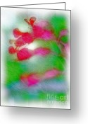 Morning Mist Images Greeting Cards - Red Buckeye Greeting Card by Judi Bagwell