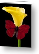 Calla Lilies Greeting Cards - Red Butterfly and Calla Lily Greeting Card by Garry Gay