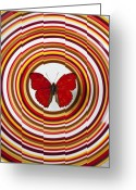 Migration Greeting Cards - Red butterfly on plate with many circles Greeting Card by Garry Gay