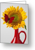 Texture Flower Greeting Cards - Red butterfly on sunflower on red pitcher Greeting Card by Garry Gay