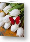 Blossoms Greeting Cards - Red butterfly on white tulips Greeting Card by Garry Gay