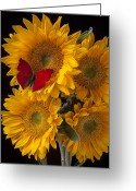 Yellows Greeting Cards - Red butterfly with four sunflowers Greeting Card by Garry Gay