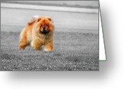 Chic Greeting Cards - Red Chow Greeting Card by Jai Johnson