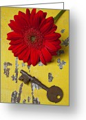 Peeling Greeting Cards - Red Daisy and Old Key Greeting Card by Garry Gay