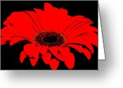 Digitalized Greeting Cards - Red Daisy On Black Background Greeting Card by Marsha Heiken