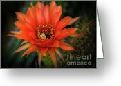 Night Blooming Greeting Cards - Red Dawn  Greeting Card by Saija  Lehtonen