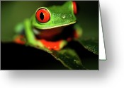 Eyed Greeting Cards - Red Eye Green Frog Greeting Card by Wildlife Cosmos