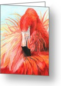 Beaches Drawings Greeting Cards - Red Flamingo Greeting Card by Carla Kurt