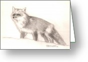 Feeding Drawings Greeting Cards - Red Fox Greeting Card by Sharon Blanchard
