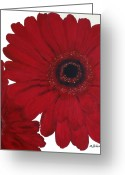 Poster Print Greeting Cards - Red Gerber Daisy Greeting Card by Marsha Heiken