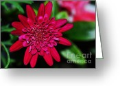 Stamen Greeting Cards - Red Gerbera Daisy Greeting Card by Kaye Menner