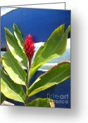 Randi Shenkman Greeting Cards - Red Ginger Greeting Card by Randi Shenkman