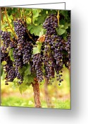 Vine Photo Greeting Cards - Red grapes Greeting Card by Elena Elisseeva