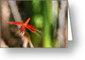 Transformative Art Greeting Cards - Red Heart Dragonfly Greeting Card by Lisa Redfern
