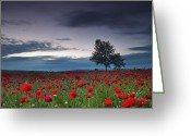 Trees Blossom Greeting Cards - Red Hoods Greeting Card by Evgeni Dinev