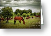 Green Day Greeting Cards - Red Horses Greeting Card by Carlos Caetano
