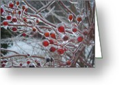 Berries Greeting Cards - Red Ice Berries Greeting Card by Kristine Nora