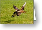 Kites Greeting Cards - Red Kites Greeting Card by Margaret S Sweeny
