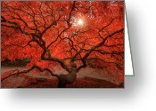Japanese Maple Greeting Cards - Red Lace Greeting Card by Dan Mihai