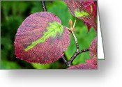 Red Fall Colors Greeting Cards - Red leaf In Vermont Greeting Card by James Steele