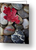 Pile Greeting Cards - Red Leaf Wet Stones Greeting Card by Garry Gay