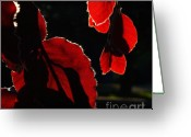 Red Leaves Greeting Cards - Red Leaves 2 Greeting Card by Jeff Breiman