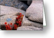 Red Leaves Greeting Cards - Red Leaves and Rocks Greeting Card by George Oze