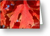 Red Leaves Greeting Cards - Red Leaves in Fall Greeting Card by Patty Vicknair