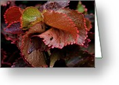 Red Leaves Greeting Cards - Red Leaves Greeting Card by Robert Ullmann